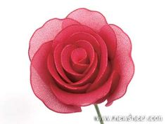 nylon stocking rose