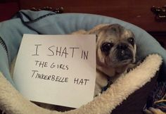 You have to check out these hilarious pics from the Dog Shaming tumblr! #5 is so funny!