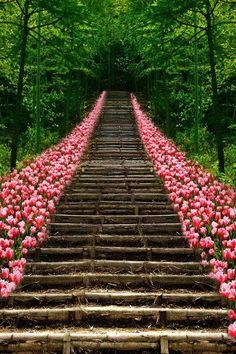 Tulip Stairs, Kyoto, Japan.