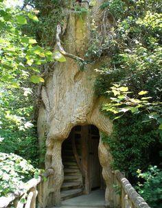 tree house inside the tree!