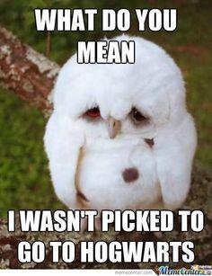 d'awwhh! breaks my heart a little lol