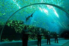 Georgia Aquarium, largest in the world