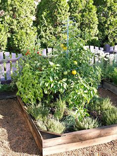 Grow your favorite pizza toppings right in your own back yard! See how here: http://www.bhg.com/gardening/vegetable/vegetables/pizza-garden/