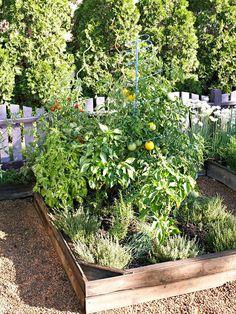 Grow a Pizza Garden