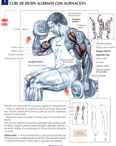 Ejercicios Biceps: Curl de bíceps alternos con supinación. by raul391970, via Flickr