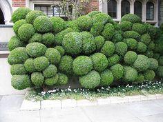 // shrubbery!