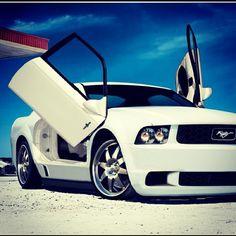 Mustang Baby!