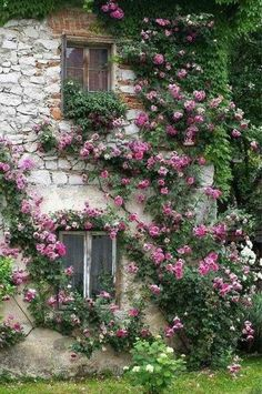 ❥ trailing vines of roses