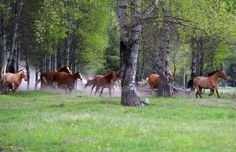 Montana Working Cattle Ranch - McGinnis Meadows Cattle & Guest Ranch in Northwest Montana