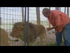 North American Lion and Wolf Rescues by Wild Animal Sanctuary. Great rescue stories from Canada and Ohio...