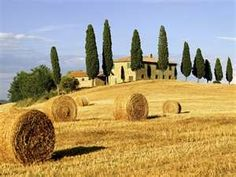 Amber-Colored Hay Bales Drying in the Tuscany Autumn Sunshine!