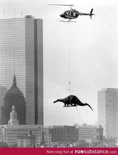 A dinosaur being delivered to the Boston Museum of Science in 1984 By helicopter