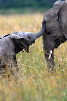 Mother and baby elephant - Cute Mother and Baby Animal Pics - Woman And Home