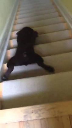 Watch: Dog Does EPIC Slide Down Stairs!