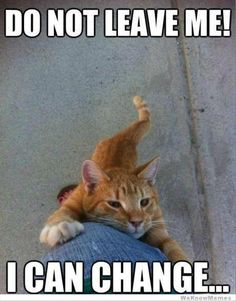 crazy cats, funny animals, kitten, funny sayings, silly cats