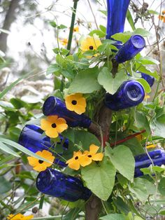 I have a blue bottle tree in my garden, kind of like this but without the vined flower.