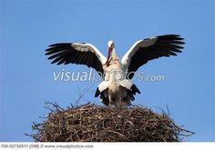 storks bring babies