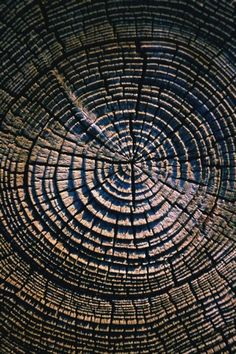 Rings of a tree