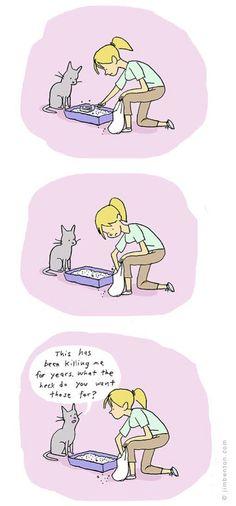 kitties, always kitties.