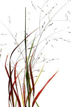 grass fire (mary jo hoffman)