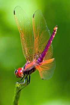 Dragonfly #libellule