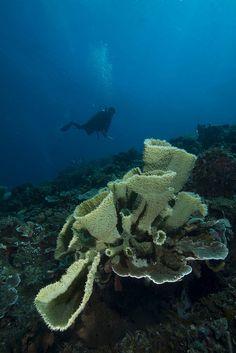 Jailolo Bay, West Halmahera