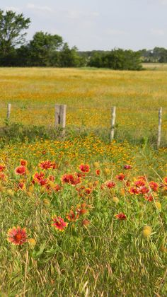 Blanket-flower and black-eyed-susans somewhere between Waco and Mexia, Texas.