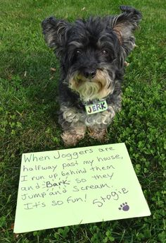 Dog Shame | When Joggers are halfway past my house, I run up...