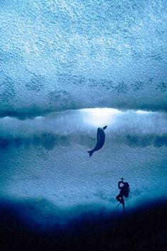 Foto: AFP PHOTO / ANTARCTIC OCEAN ALLIANCESo sieht's von unten aus: Ein Fotograf im eiskalten Antarktis-Wasser macht Aufnahmen von einer Robbe.