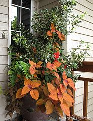 Coleus 'Sedona' enhances the earth tones in this shady design. The rustic container is triangular in profile so fits easily into a tight corner. Design by Le jardinet