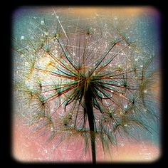 Distressed Dandelion | Would make a good tattoo!!
