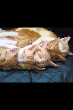 Cutie cats