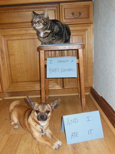 Pet Shaming...they seem very happy with themselves. No shame at all...lol.