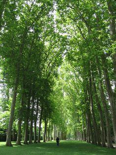 Versailles: Royal Park