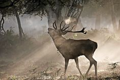 Deer framed in autumn dawn (early morning in autumn), such beautiful light! #photography