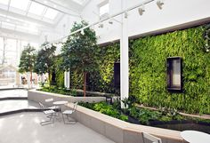 offic green, green fortun, plantwal, green wall, plant wall, lose floor, green citi, garden, floor space