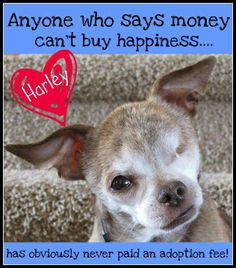 Money CAN buy happiness! #NMDR #puppymills #puppymillsurvivor #adopt
