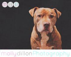 www.mollydillonphotography.com #mollydillonphotography #petportraits