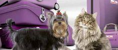 Una página web ofrece un servicio para conocer hoteles, playas y restaurantes donde los perros y gatos son bien acogidos