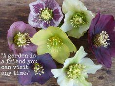 plant, imaginary friends, spring flowers, paint color, endur garden, gardening quotes, gardens, garden quot, visit anytim
