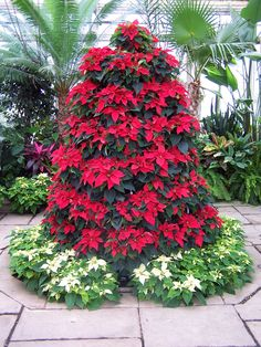 Are you seeing this Poinsettia Tree @Danya Miller Blythe Miller Blythe?  If we ever want to spend a zillion dollars on a live flower arrangement, this would be the way to do it!  SO pretty!