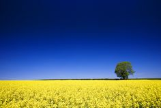 Blue meets Yellow by Paul O' Connell, via Flickr
