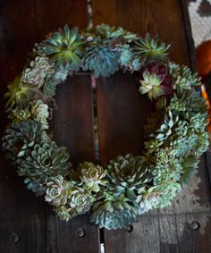 Living Succulent Wreath...I am dying to make one of these!