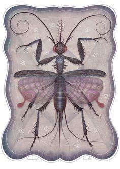Entomology Vol. II by Vladimir