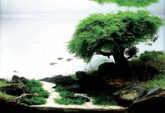 Fish Forest Aquascape