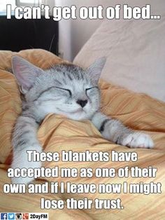I'm one of the blankets now.