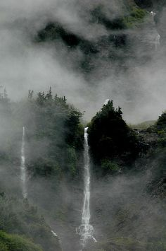 *INTO THE MIST (Enchanted Valley, Olympic National Park, Washington)