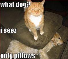 Soooo my cat!