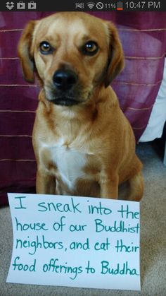 Dog shaming   ...........click here to find out more  http://googydog.com