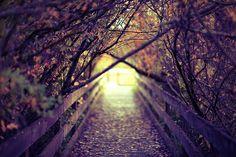 tree, autumn leaves, the bridge, path, place